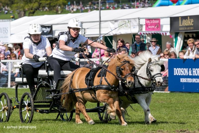 Horse trials-110