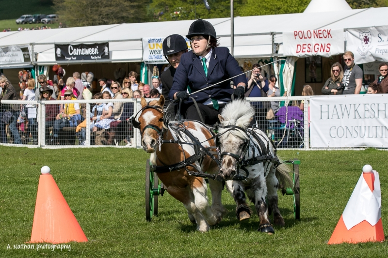 Horse trials-16-3