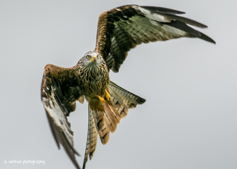 Kites-262