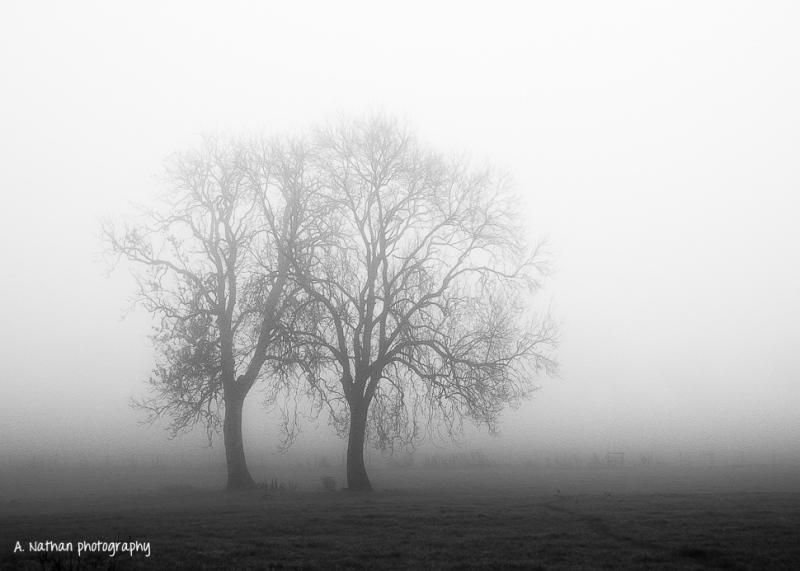 trees-in-mist-1