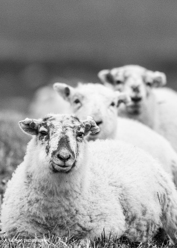 Get your sheep in a row